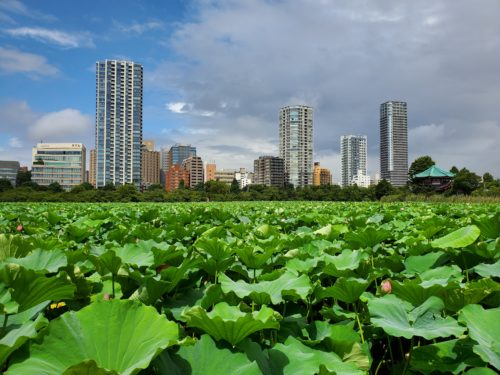 DxOMark上位ランクインのスマートフォンによるカメラ性能比較、上野恩賜公園・不忍池